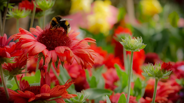 the bee in red