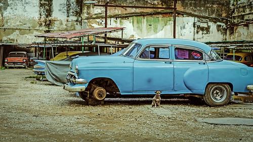autos cars chevrolet chevy cuba dog guard old lahabanavieja havana cu