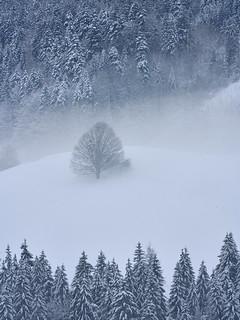 Beauty in the Mist - Schönheit im Nebel, Bavaria | by W_von_S