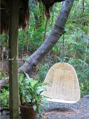 Wicker Hammock Chair