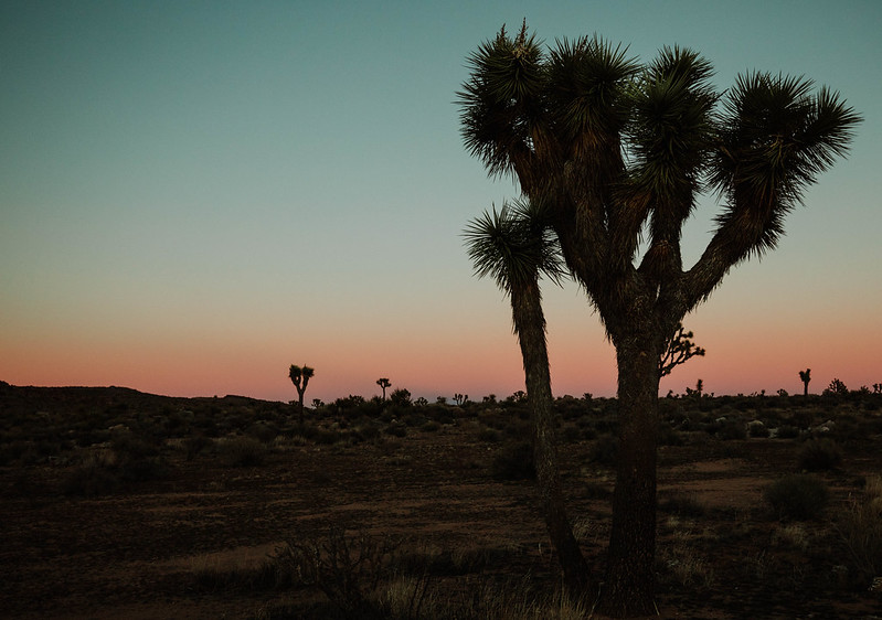 Joshua Tree desert sunset California