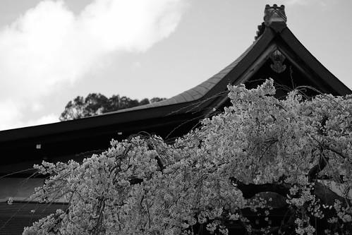 01-04-2019 Nara (10)