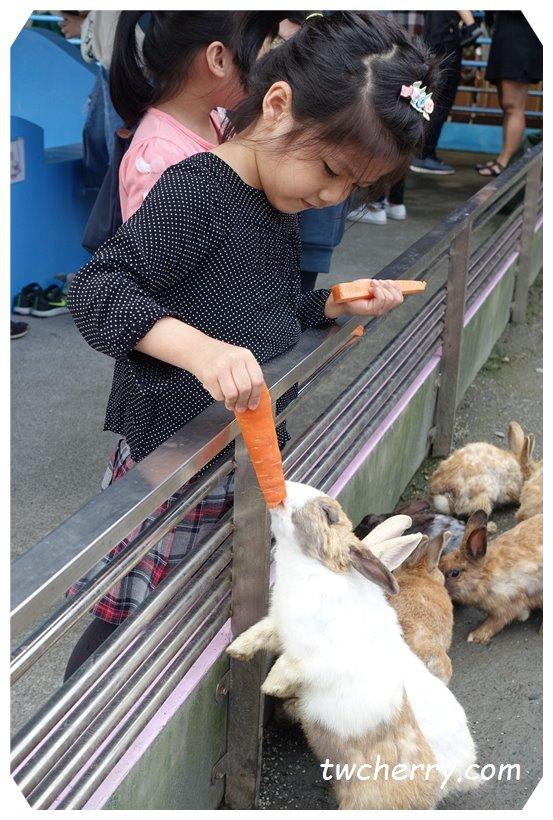 宜蘭礁溪水鹿咖啡,宜蘭親子餐廳,沙坑,遊樂設施,餵食兔子,水鹿,羊,陸龜,宜蘭動物