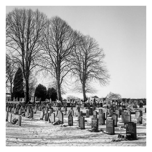 FILM - Three trees in Eyam cemetery