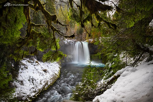 Ice, moss, dogs, and slides | by Matt Straite Photography