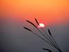 Dawn by Debmalya Mukherjee
