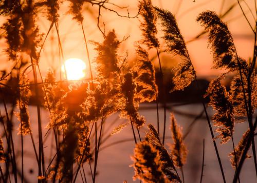 2019 canada february ontario rivercanard snow winter sunset sun ice cold