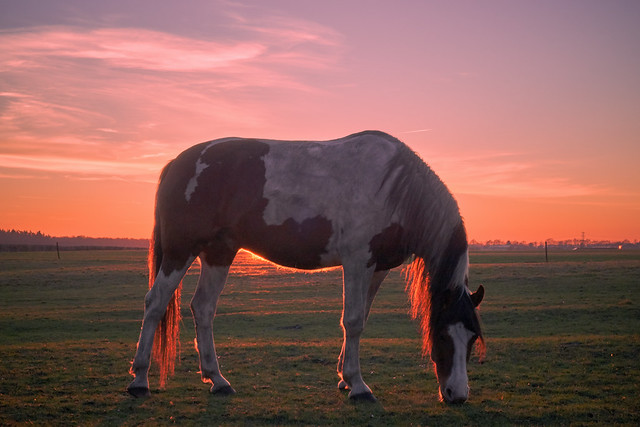 horse & sunset