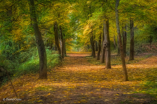 autumn landscape sierranevadafoothills empiremine canonef24105mmf4lisusm grassvalley canon5dmarkiii topazstudio lightroom6 fall nevadacounty california