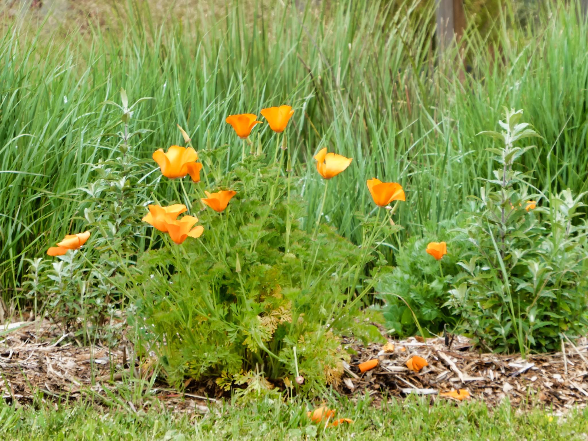 2019-04-06 - Outdoor Photography - Nature - Cornerstone Sonoma