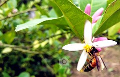 #Bee #Collect #Honey