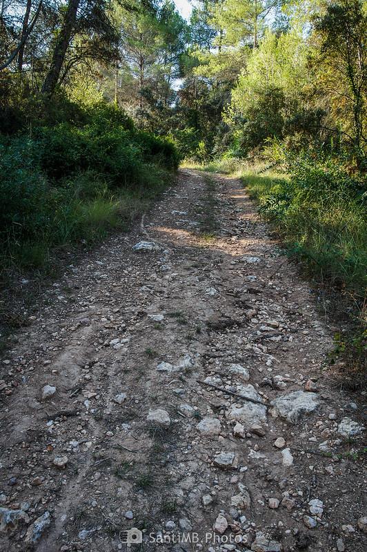Camino de hormigas en medio de un camino