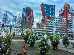 Klaipeda little Christmas Trees