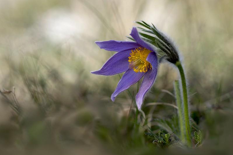 Обои цветок, природа, весна картинки на рабочий стол, раздел цветы - скачать