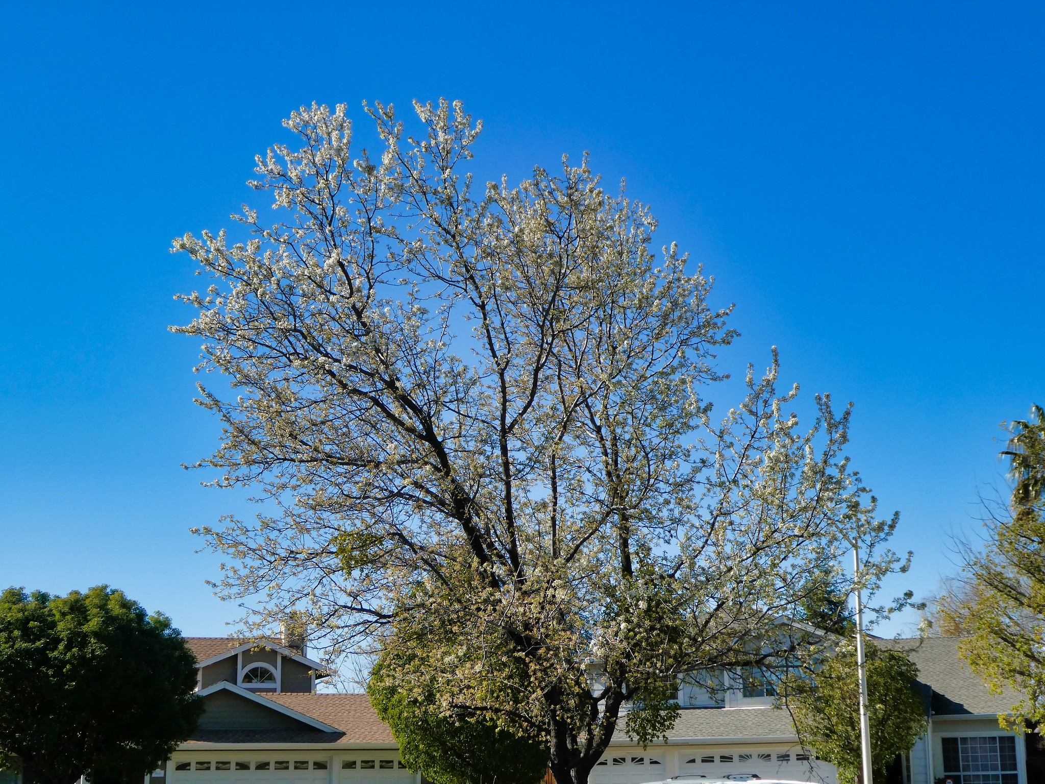2019-02-19 - Nature Photography - Trees - Signs of Early Spring, Set 2