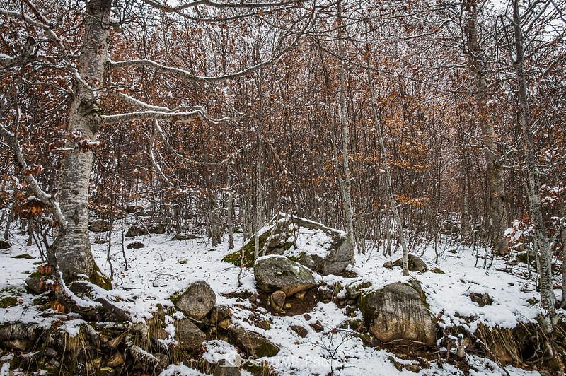 Hayedo nevado en el Val de Molières