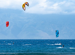 kites and lizard-40.jpg