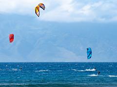 kites and lizard-40.jpg