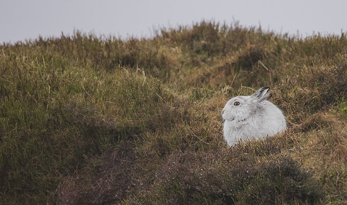 10th February 2019_ Mountain Hare_ Bleaklow_ 03
