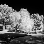 0246937642155-108-19-02-In the Park in Infread-16-HDR-Black and white