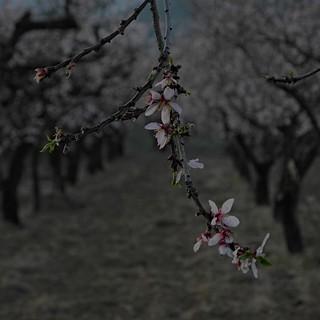 Heart blossoms | by llambreig