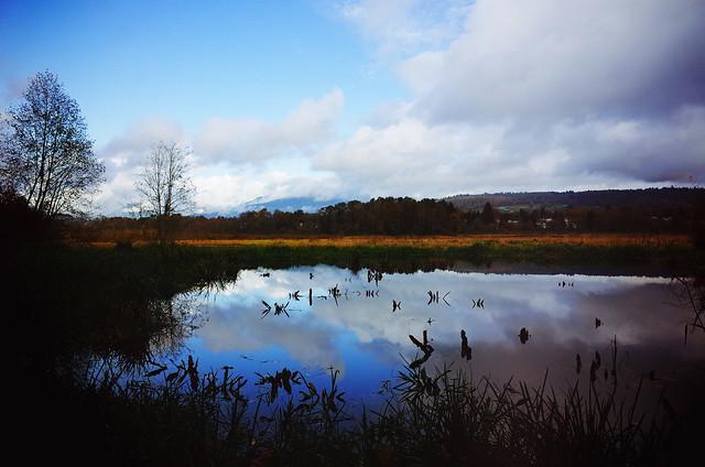 Late-autumn landscape