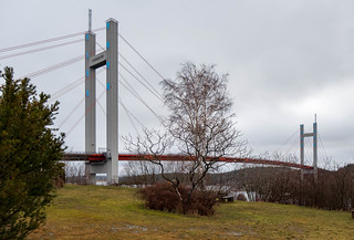 Tree in front of the Tjörn Bridge   by Thor Thorsson 1