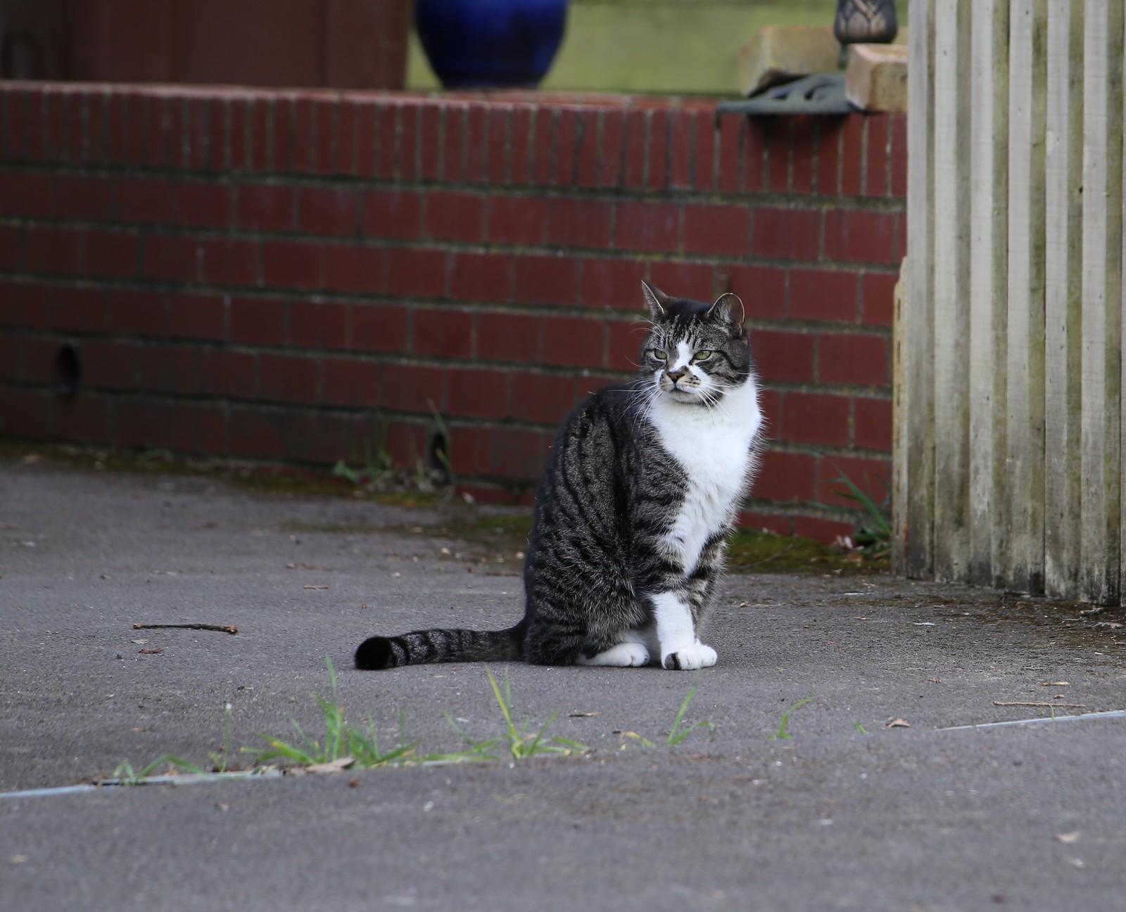 Groombridge cat