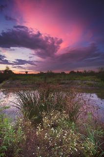 Pink Sunset   by Millan_1977