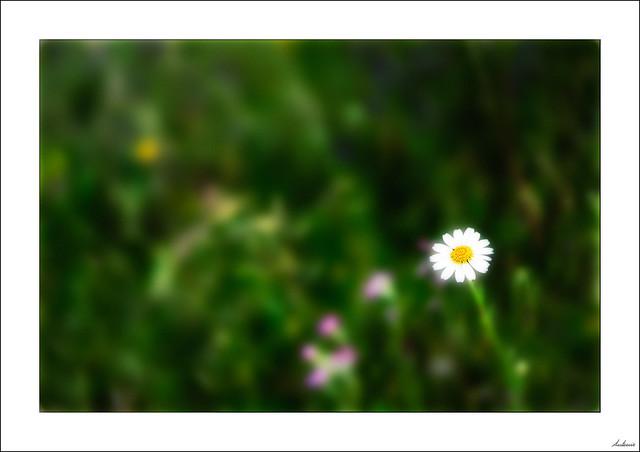 Una flor no hace primavera pero anima a las compañeras