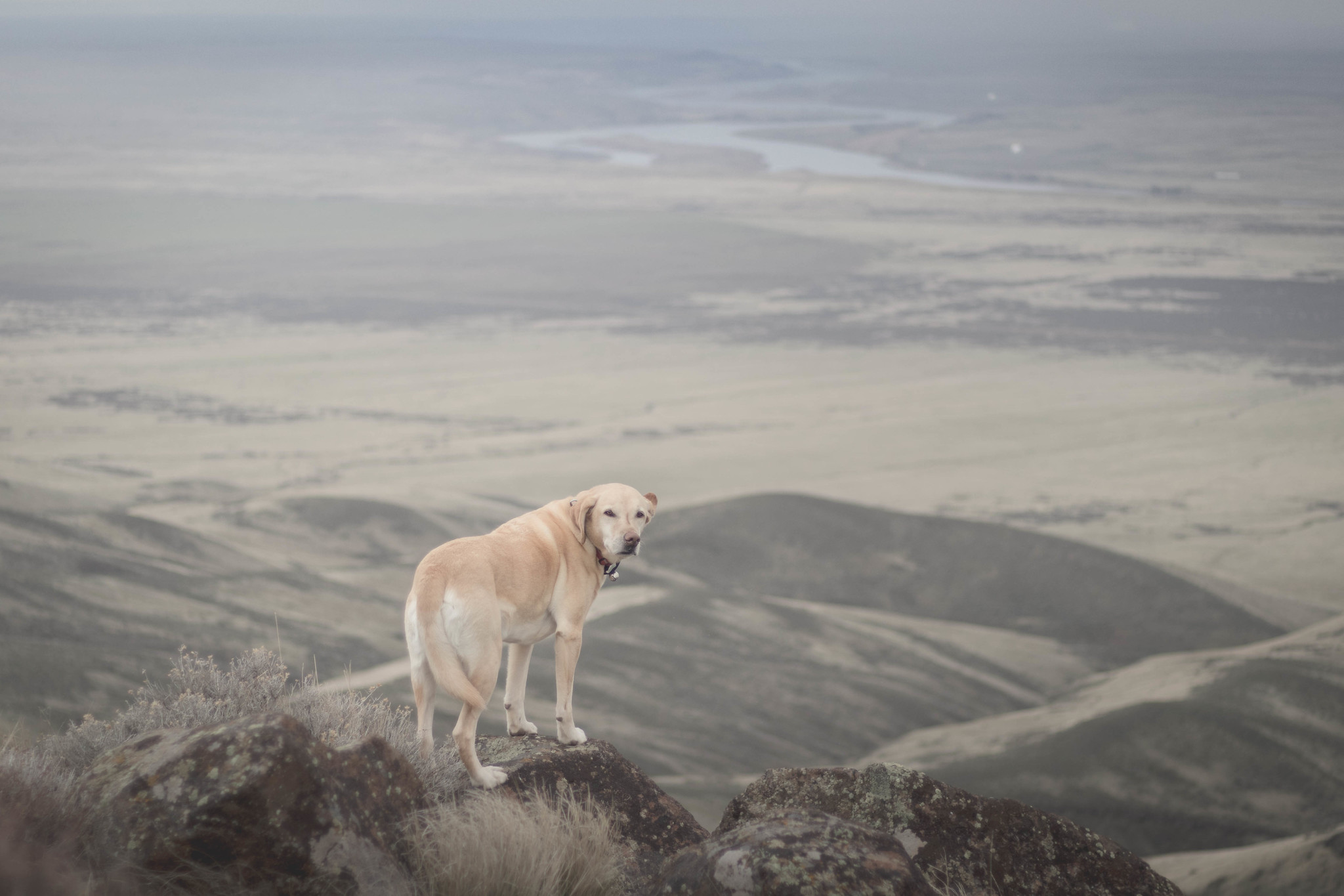 Summit dogs on Wahatis Peak