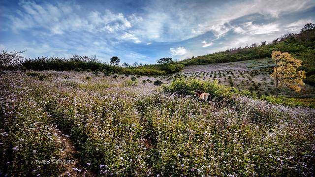 Wildflowers - Dalat