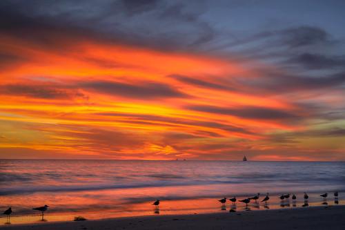 sunset sailboat seagulls whitneybeach gulfofmexico beach sand longexposure longboatkey sarasota florida