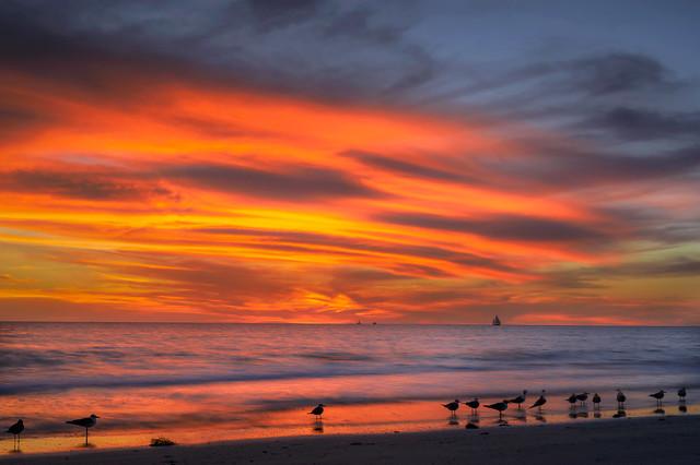 Sunset with sailboat and sea gulls on Whitney Beach, Longboat Key near Sarasota, Florida