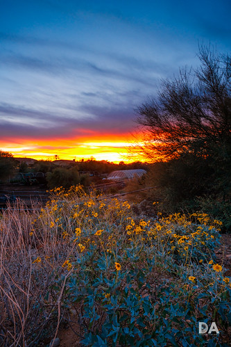 fujinonxf816mmf28r usa wideangle lens fuji fujixt3 review mirrorless wildflower dustinabbott dustinabbottnet travel sunset photography comparison xt3 fujifilm test desert arizona photodujour scottsdale unitedstatesofamerica us greenhouse greendream explore explored