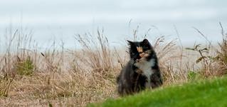 Wild Beach Cat | by Sheila Newenham
