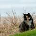 Wild Beach Cat