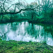 Spring awakening by Peter u Hilde