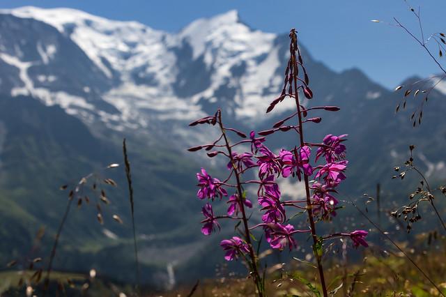 Devant la Chaîne du Mont Blanc (Facing the Mont Blanc Range)