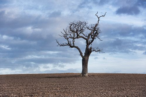 tree hill field stuartmcpherson mud sky norfolk winter gnarled bark dogginglaybyavoidance