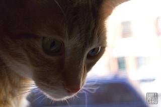 Backlit Kitty   by willceau