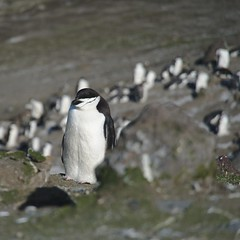 Baily Head, Deception Island