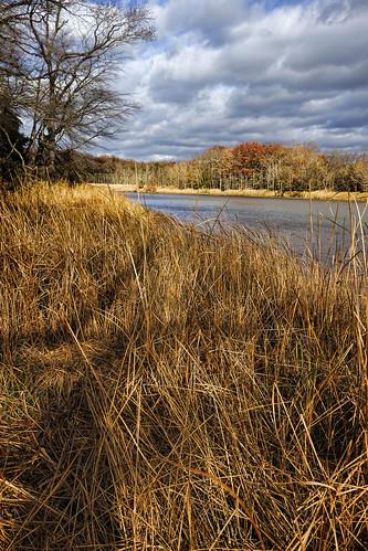 saltwater marsh wetland chesapeake bay water landscape park baltimore county maryland dundee creek cbf