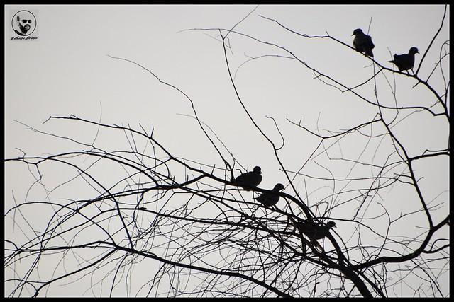 #الإمارات #الشارقة #محمية_واسط_الطبيعية #مركز_واسط_للأراضي_الرطبة #طيور #طبيعة #سلويت #تصويري #UAE #Sharjah #wasit_birds_reserve #wasit_wetland_centre #silhouette #trees #bird #birds #nature #myphoto #photooftheday #picoftheday