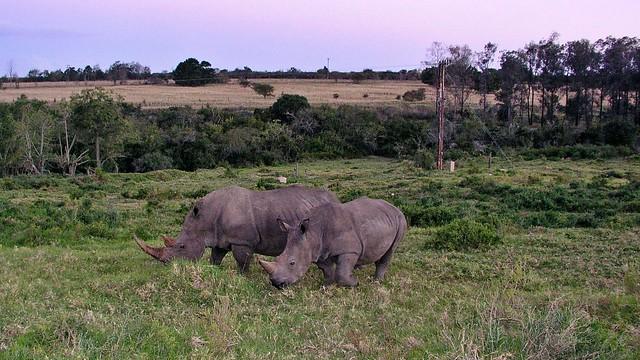 Nashörner Lalibela Game Reserve