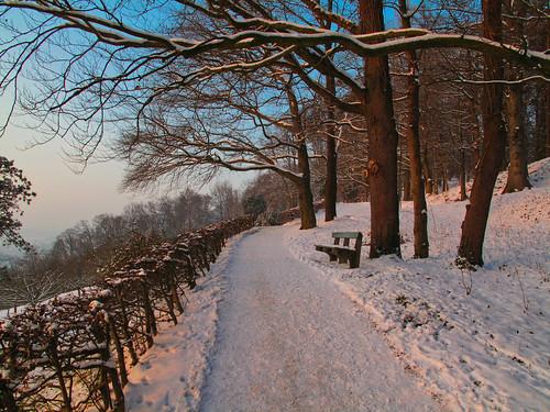 hedge tree forest snow winter january path bench wood sky blue evening sunset freinberg linz upperaustria oberösterreich austria österreich outdoor landscape serene trail road
