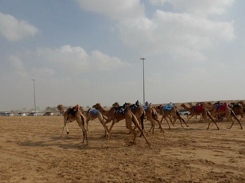 Al Marmoom Camel Racing Track - 8