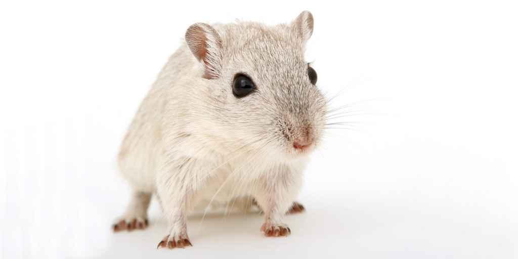 Une étude sur le comportement des souris dans l'espace
