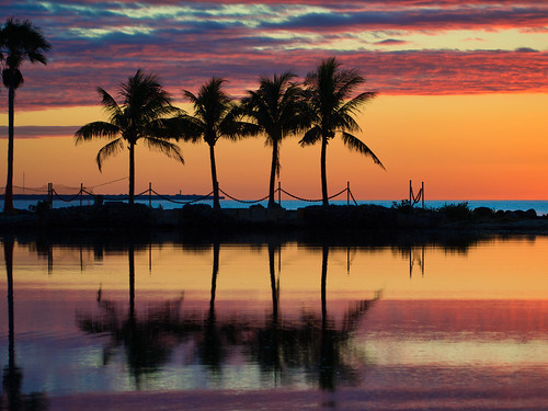 morning dawn sunrise sun rise twilight orange sky silhouette palm fronds trees biscayne bay gulf stream playas beach ocean water waves tropical