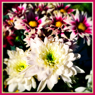 A Bright Bouquet | by JulieK (thanks for 8 million views)
